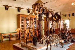 geologicheskij-muzej-im-a-a-shtukenberga