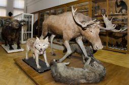 zoologicheskij-muzej-im-e-e-eversmana